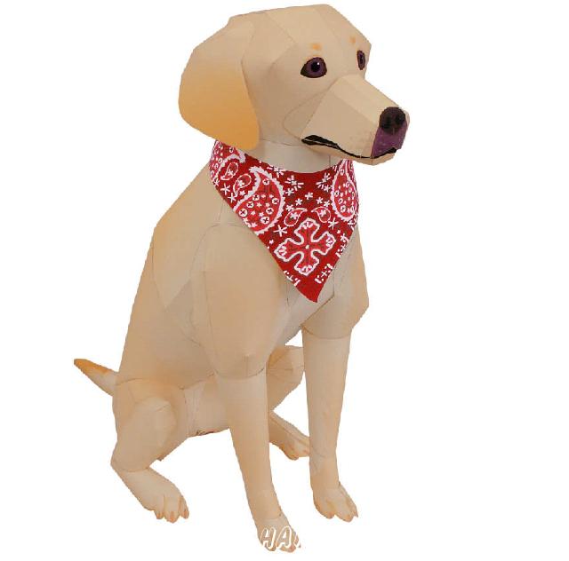Лабрадор-Ретривер (собака). (желтый цвет, черный цвет)