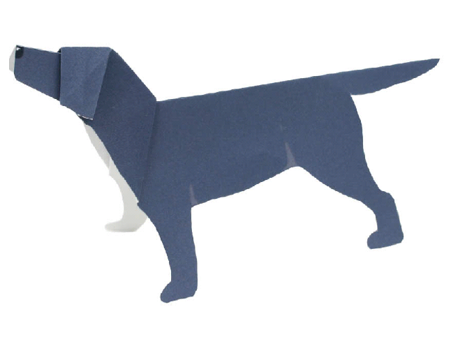 Labrador Retriever(dog)