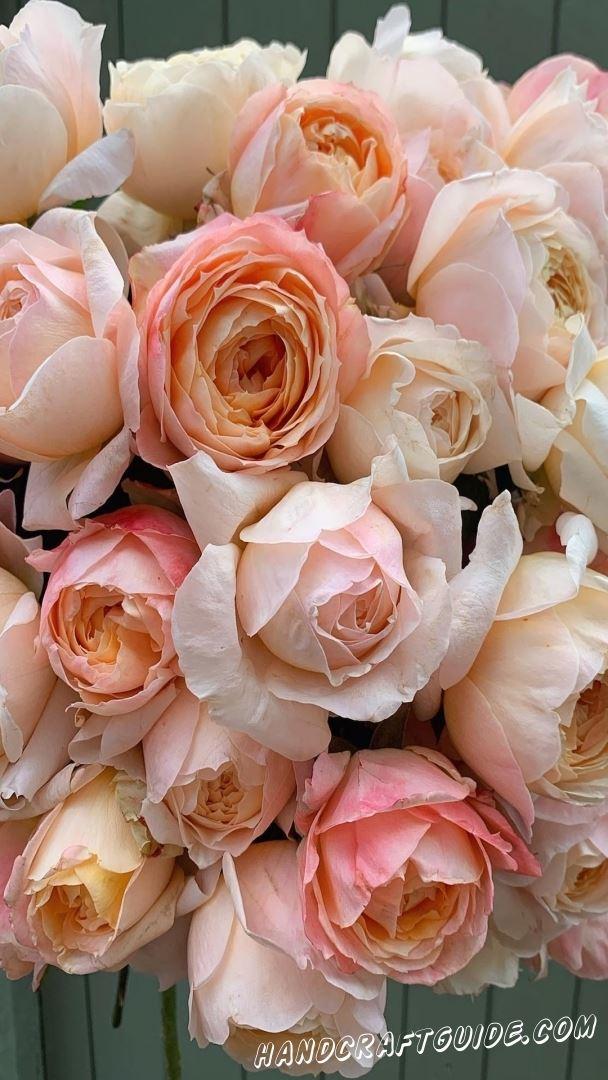 картинки для заставки цветы