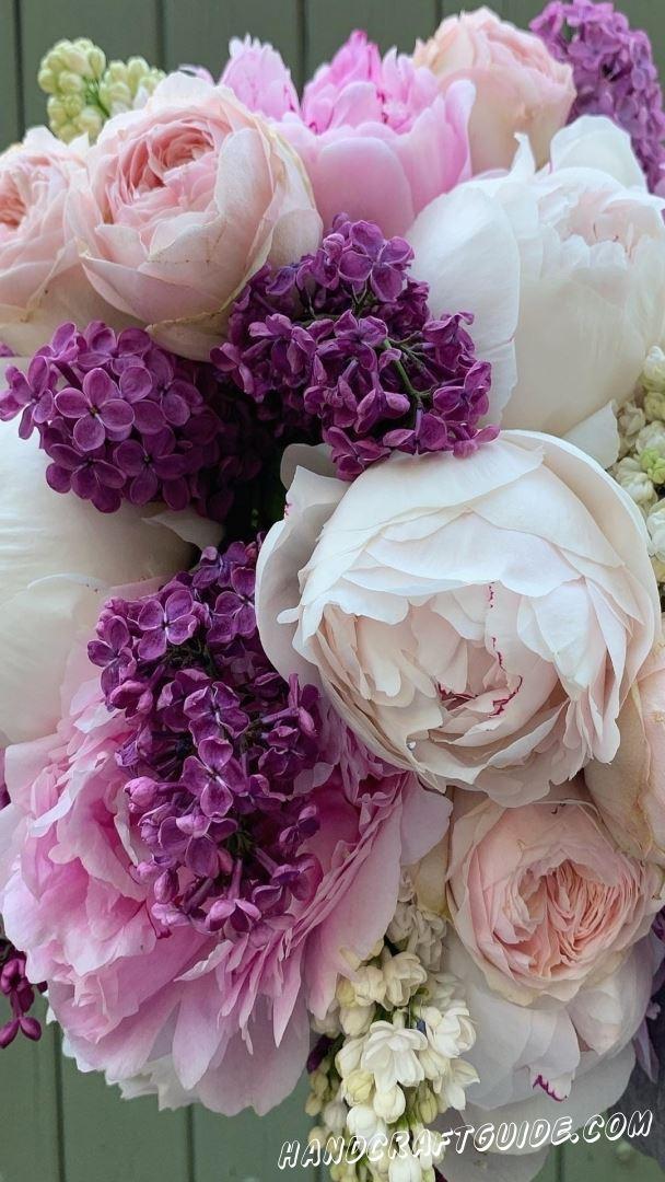 картинки цветы бесплатно