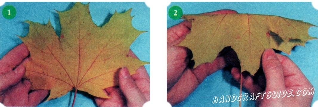Choose green, yellow and red maple leaves. For this work does not fit too small, dry, torn leaves. To make a bouquet, useful and colorful leaves of other trees and plants.
