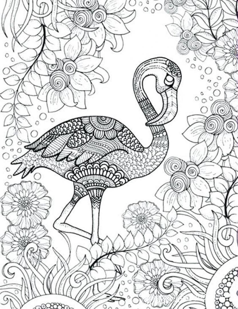 раскраски антистресс птицы