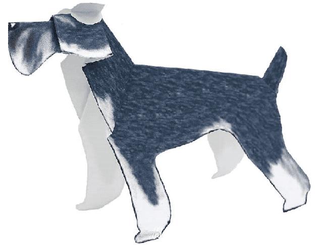 Шнауцер (собака)