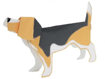 Beagle(dog)